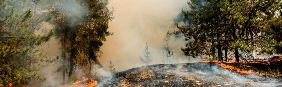 Waldbrände: Seit 2018 waren 1200 Soldaten im Löscheinsatz