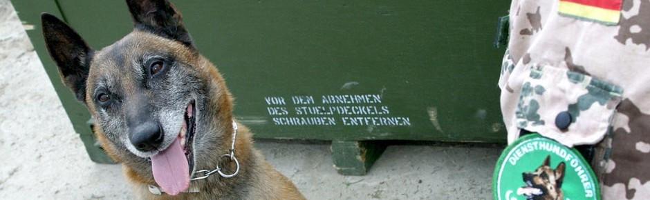 Sechs Bundeswehr-Diensthunde derzeit im Auslandseinsatz