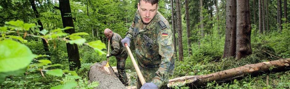 Borkenkäfer: Soldaten helfen in Sachsen und Rheinland-Pfalz