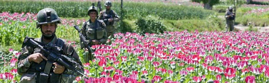 Schlafmohn und Opium: traurige Rekorde in Afghanistan